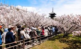 Sakura blossom in Kyoto, Japan Royalty Free Stock Photography