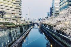 Sakura blossom at Meguro River. stock image