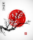 Sakura in blossom and red sun, symbol of Japan on white background. Contains hieroglyphs - zen, freedom, nature