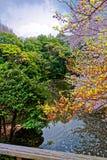 Sakura blossom Stock Photos