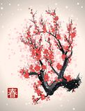 Sakura blossom tree branch Stock Photos