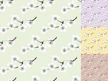 Sakura blossom vector seamless pattern. Royalty Free Stock Photos