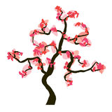Sakura blossom  on white background,. Illustration Royalty Free Stock Images
