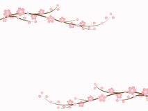 Sakura Blossoms. Branch of spring cherry blossoms with copy-space Royalty Free Stock Photos