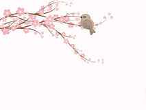 Sakura Blossoms. A sparrow sits on a branch of spring cherry blossoms Stock Photography