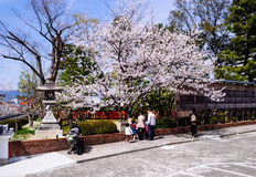 Sakura Blossoms at Fushimi Inari shrine Royalty Free Stock Image