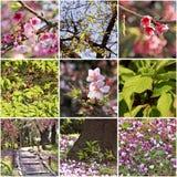Sakura blossoms in the Japanese garden. Spring collage. Royalty Free Stock Photos