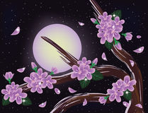 Sakura blossoms on night sky Royalty Free Stock Image