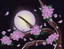 Sakura blossoms on night sky Royalty Free Stock Image