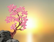 Sakura blossoms. A tree of pink cherry on a stone. Against the background of a beautiful sunset. illustration Royalty Free Stock Photo