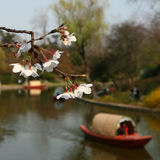 Sakura and Boat Royalty Free Stock Photo