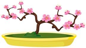Sakura bonsai Stock Photos