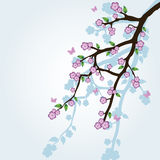 Sakura branch Stock Images