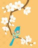 Sakura branch. Blue bird on blossom cherry branch Royalty Free Stock Photography