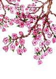 Sakura Branch Painting stock illustratie
