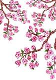 Sakura Branch Painting royalty-vrije illustratie