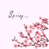 Sakura branch on the white background. Word spring. Vector illustration Stock Photos