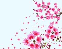 Sakura. A branched curved branch of a blossoming cherry spring tree with purple flowers and buds. Flowers close-up. Isolated Vector Illustration Stock Image