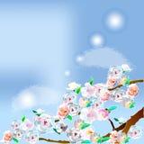 Sakura Branches Fotos de archivo libres de regalías