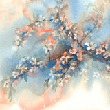Sakura branches in bloom watercolor background Royalty Free Stock Images