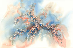 Sakura branches in bloom watercolor background Royalty Free Stock Image