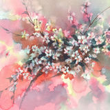 Sakura branches in bloom watercolor background Royalty Free Stock Photo