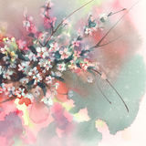 Sakura branches in bloom watercolor background Royalty Free Stock Photography