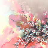 Sakura branches in bloom watercolor background Stock Photos