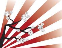 Sakura branco em listras vermelhas ilustração do vetor