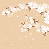 Sakura - Brown. Sakura flowers on the brown ground Royalty Free Stock Image