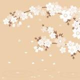 sakura brun Image libre de droits