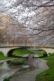 sakura canal Royalty Free Stock Photo