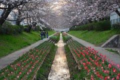 Sakura canal Royalty Free Stock Image