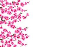 Sakura. Card. Branched branches of a blossoming cherry spring tree with purple flowers and buds. Isolated on white. Background. Vector illustration Stock Photos