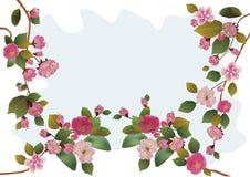 Sakura. cartolina. menu Immagine Stock Libera da Diritti