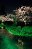 Sakura a cereja japonesa na noite Foto de Stock Royalty Free