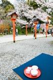 Sakura-cha te av körsbärsröda blomningar, i den Hirano Jinja relikskrin, Kyoto, Japan Fotografering för Bildbyråer