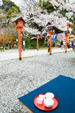 Sakura-cha, Tea of Cherry blossoms, in Hirano Jinja Shrine, Kyoto, Japan Stock Image