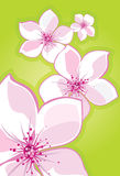 Sakura-cherry. Vectorial image of flowers of sakury on a background Royalty Free Stock Image