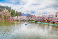 Sakura,Cherry blossom festival . Royalty Free Stock Image