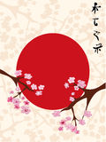 Sakura (cherry blossom) floral background Royalty Free Stock Photo