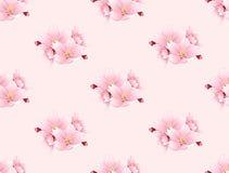 Sakura Cherry Blossom Flower Seamless on Pink Background. Vector Illustration. Royalty Free Stock Photo