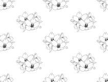 Sakura Cherry Blossom Flower Seamless on White Background. Vector Illustration. Stock Images