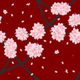 Sakura Cherry Blossom Flower sur le fond rouge illustration stock