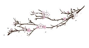 Sakura cherry pink blossom flowers illustration. Tender sakura cherry blossom illustration in pink and brown petals fly in the air royalty free illustration