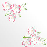 Sakura Cherry Blossom flowers in paper cut style background Royalty Free Stock Images
