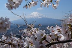 Fuji mountain with Sakura, cherry blossom, Japan in April. Spring in Japan can only mean one thing: cherry blossom. Sandwiched between the long, bitter winter stock image