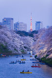 Sakura cherry blossom light up Royalty Free Stock Images