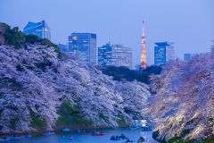Sakura cherry blossom light up and Tokyo Tower landmark stock photography