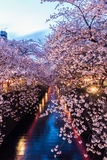 Sakura. Cherry blossom at Meguro Canal. stock image